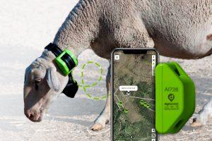GPS pour moutons