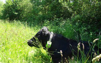 Médias britanniques comme la BBC ou FarmingUK font l'écho de la collaboration entre Cows in Clover et Digitanimal