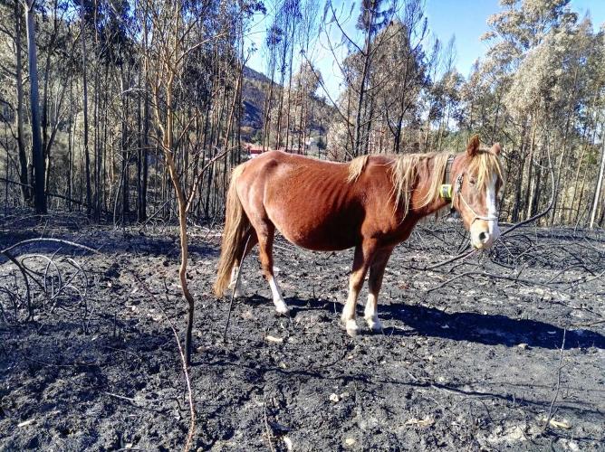 Digitanimal dans les incendies d'Espagne et du Portugal