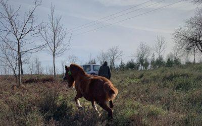 Le mystère des chevaux mutilés en France et le rôle des colliers GPS par digitanimal